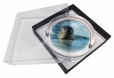 Sea Lion in Ice Water Glass Paperweight in Gift Box Christmas Present, AF-S2PW