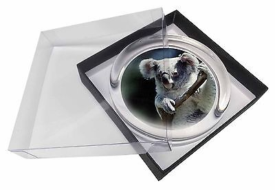 Cute Koala Bear Glass Paperweight in Gift Box Christmas Present, AKB-1PW
