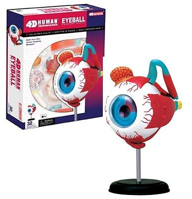 4D EYEBALL Human Body Eye ball Anatomy 3D Puzzle Model kit science Medical -