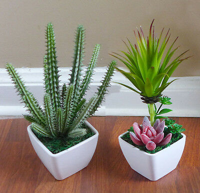 Plastic Artificial Grass Plant (Cactus Potted Plastic Artificial Grass unkillable Succulents Plants With)
