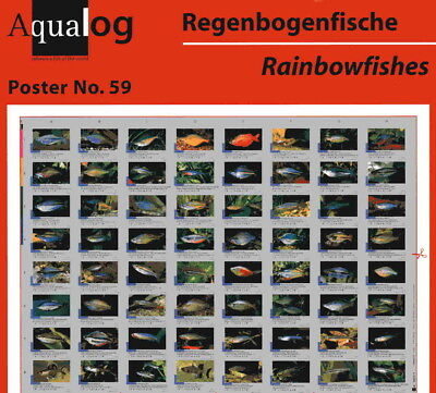 AQUALOG - Fold Poster The Nicest Rainbow - Rainbow Fishes