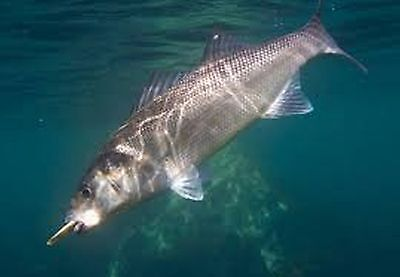 instantfishermanuk