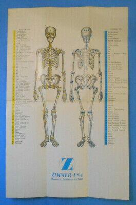 Zimmer Biomet Vtg Human Anatomy Medical Skeleton Bones Advertising Poster Skull