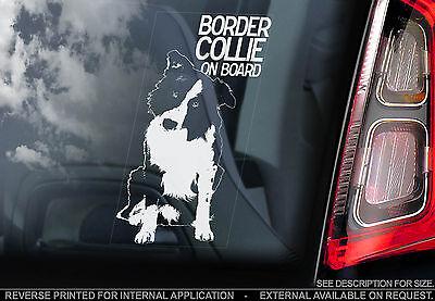 Scottish Border Collie - English Border Collie - Car Window Sticker - Scottish Sheep Dog Sheepdog - TYP1