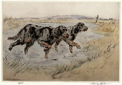GORDON SETTER DOG LIMITED EDITION DRY-POINT ENGRAVING PRINT by Henry Wilkinson