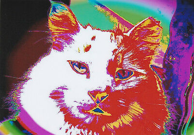 """Space Cat"" ACEO ACT Print Cat Art Mug Shot Feline Art Kitten"