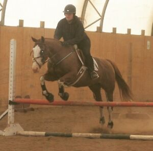 Beautiful QH for partboard