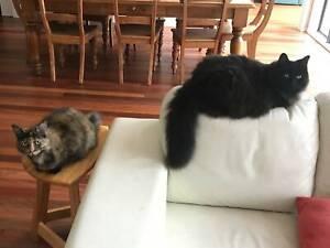 Cats needing temporary home