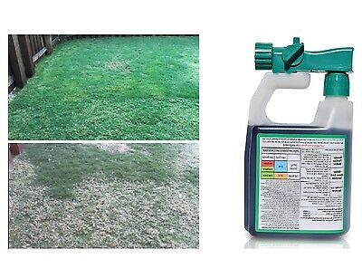 Grass Seed Lawn Care Intense Booster Natural Seed Spray Growing Seeding Simply