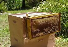 NEW BEEKEEPING HONEY FRAME HOLDER PERCH -SAVES BENDING Wollombi Cessnock Area Preview