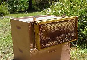 NEW BEEKEEPING HONEY BEE FRAME HOLDER PERCH S/S -SAVES BENDING Wollombi Cessnock Area Preview