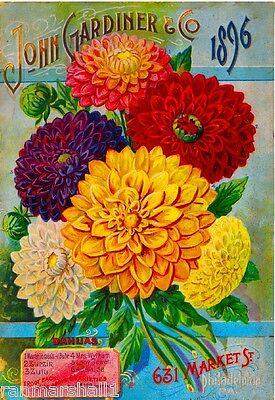 1896 John Gardiner Dahlias Vintage Flowers Seed Packet Adver