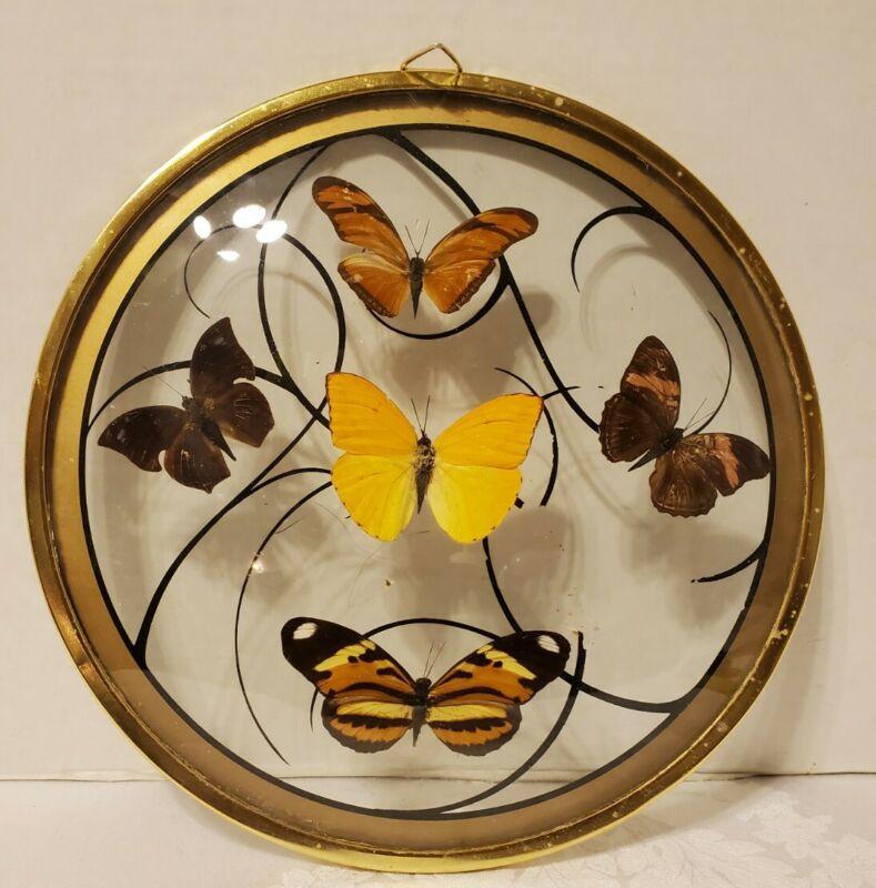 Butterfly Wall Decor Framed Round 5 Specimen
