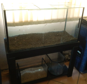 Free fish tank Beacon Hill Manly Area Preview
