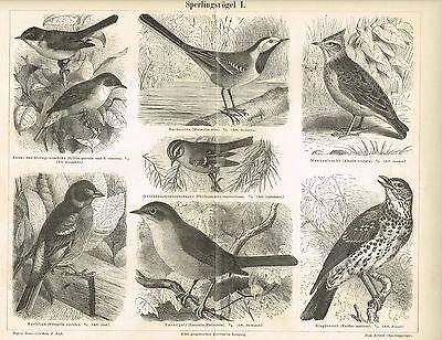 Tafel BACHSTELZE / NACHTIGALL / BUCHFINK / DROSSEL 1889 Original-Holzstich