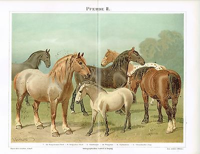 Farbtafel PFERDE / OLDENBURGER / BELGIER / PONY 1890 Original-Lithographie
