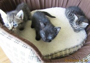 Only 2 kittens left for sale!