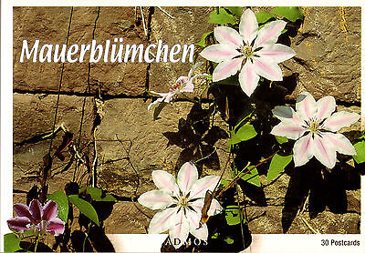 Postkartenbuch Mauerblümchen 30 Postkarten Blumen NEU!