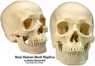 Real Human Skeleton For Sale