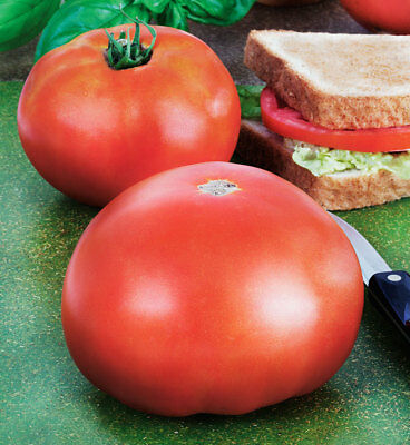 Park's Whopper Improved F1 Hybrid Tomato Seeds  - beautiful big tasty red tomato