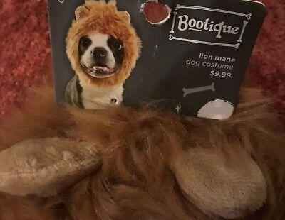 - Lion Dog Kostüm Xl
