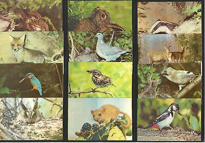 USSR Ukraine 1990 Taschenkalender Wild Animals Rar Set of 12 pocket calendar New