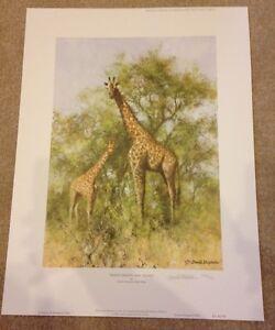 Masai Giraffe and Young Limited Edition by David Shepherd