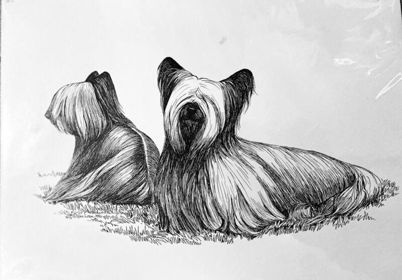 Skye Terrier Original Pen & Ink By Martha Van Loan 1990