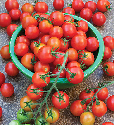 40++ Organic Sweetie Cherry Tomatoes Seeds FREE SHIPPING
