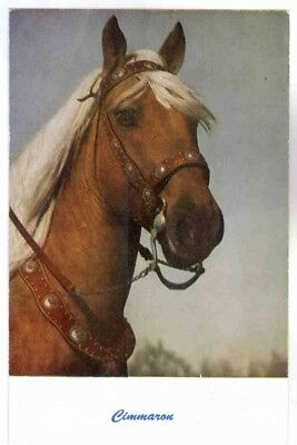CIMMARON, PALOMINO HORSE WITH CONCHO COVERED BRIDLE AND BREAST COLLAR POSTCARD