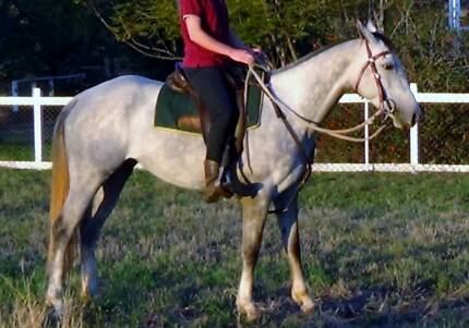 ASH Grey Mare Toowoomba 4350 Toowoomba City Preview