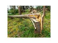Trees wanted for firewood