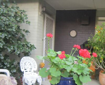 Great inner North location:  share house with middle aged woman Ainslie North Canberra Preview