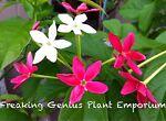 Freaking Genius Plant Emporium