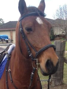 Black bridles Stroud Great Lakes Area Preview