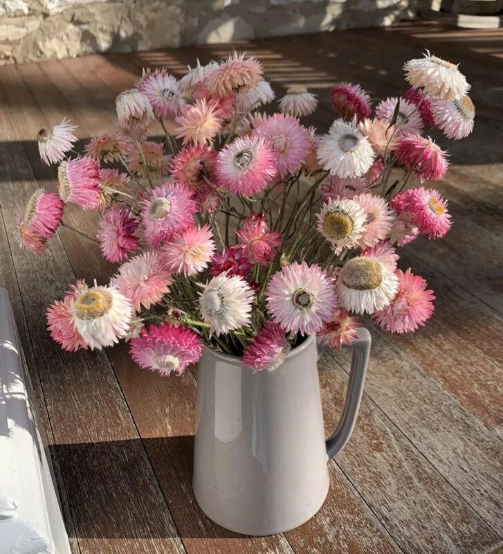 Dried Flower Strawflower Bouquet Pink Stems USA 50 Pcs