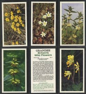 Full-Set-Players-Grandee-Britains-Wild-Flowers-T30-1986-EX-Gl401-341
