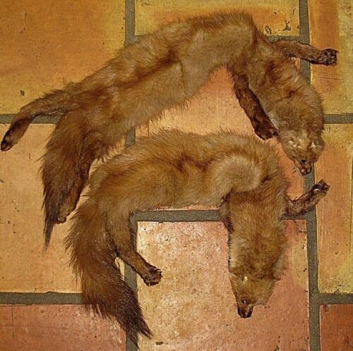 LOT 2 VINTAGE FULL BODY BROWN FOX FUR WINTER NECK STOLE WRAP SCARF COLLAR PELT