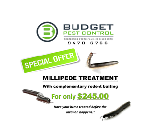 Millipede Treatment with complimentary rodent baiting South Perth South Perth Area Preview