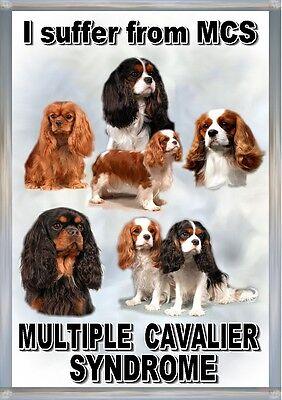Cavalier King Charles Spaniel Dog Blank Card Design No 25 by Starprint