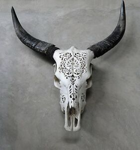 Cow skull Ormeau Gold Coast North Preview