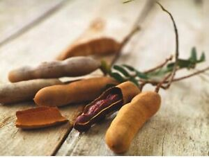 Tamarind plants Stapylton Gold Coast North Preview