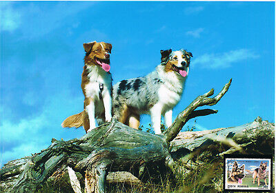 Australischer Schäferhund Schmuckblatt 1.2
