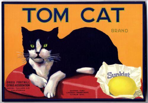 TOM CAT~RARE ORIGINAL 1920s OROSI CALIFORNIA AUTHENTIC LEMON CRATE FRUIT LABEL
