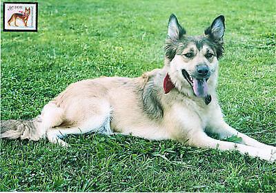 Belgischer Schäferhund Schmuckblatt 1.2