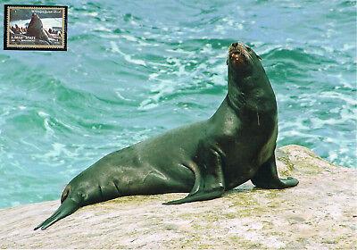 Seehund Schmuckblatt 2.2