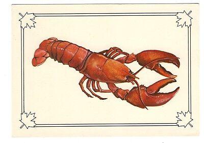 Famous Atlantic Lobster Vintage 4x6 Postcard Jun18