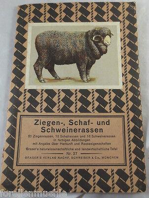 Ziegen Schafe Schweine Graser's Verlag Tafel Nr. 27 um 1920 Saanenziege