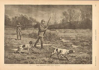 Dogs, Bird Hunting, Spring Snipe Shooting, English Setter, 1886 Antique Print