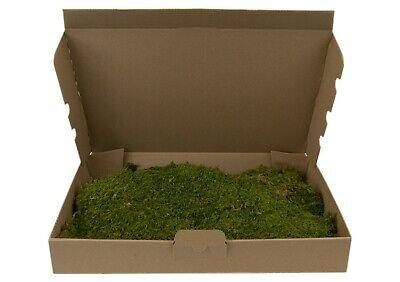 Moosplatten Moosmatten kaufen echtes Moos Dekomoos Natur Moss Plattenmoos Matte